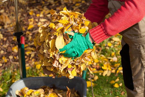 Всю опавшую листву нужно убрать