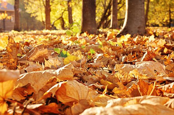 Листья под ногами