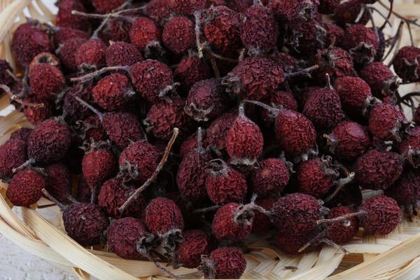 Высушенные плоды боярышника