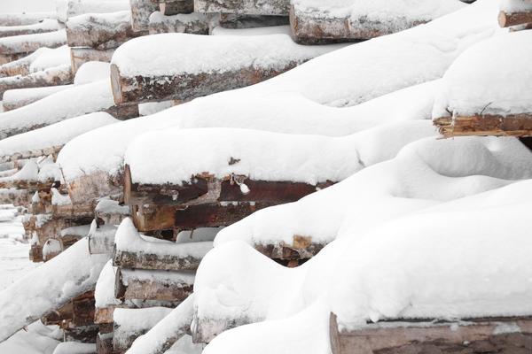 Пиловочник в снегу.