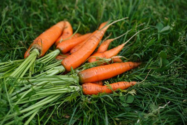 Ополоснутая морковь...