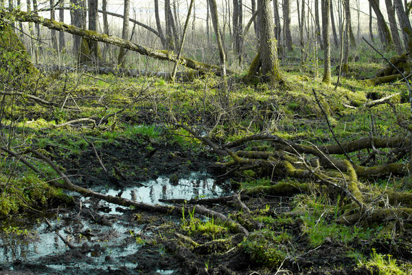 Разложение органики - типичный природный процесс, происходящий непрерывно