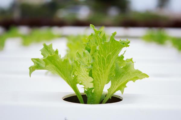 Новые технологии позволили управлять растениями