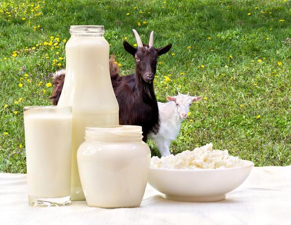 Из козьего молока можно приготовить много вкусных и полезных продуктов