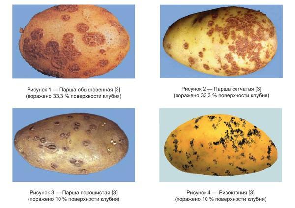 ГОСТ Р 55329-2012 Картофель семенной. Приемка и методы анализа
