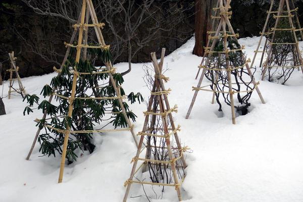Часто садоводы, особенно начинающие, стремятся укрыть большинство растений в саду и даже утеплить плодовые деревья