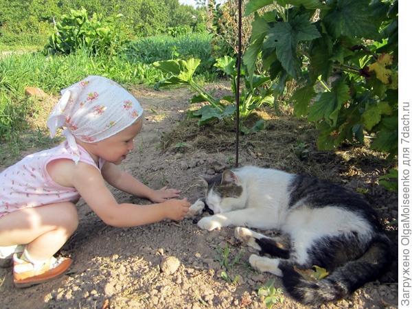 кот и черная смородина