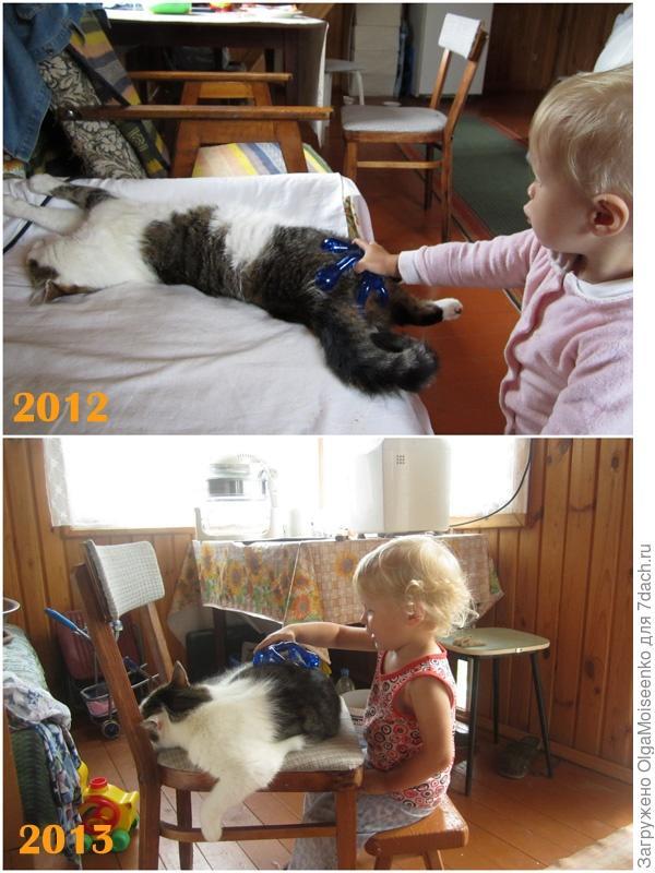 массаж для кота