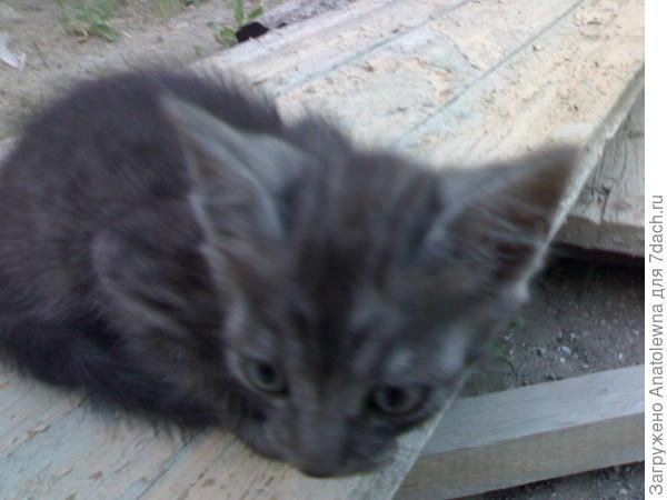 пугливый котик
