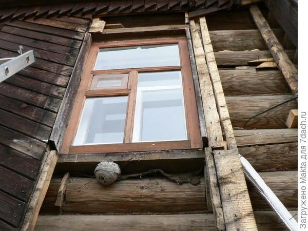 осиное гнездо под старой вагонкой