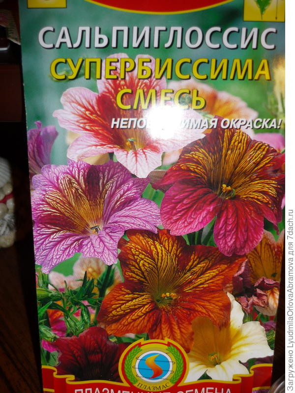Семена сальпиглоссиса