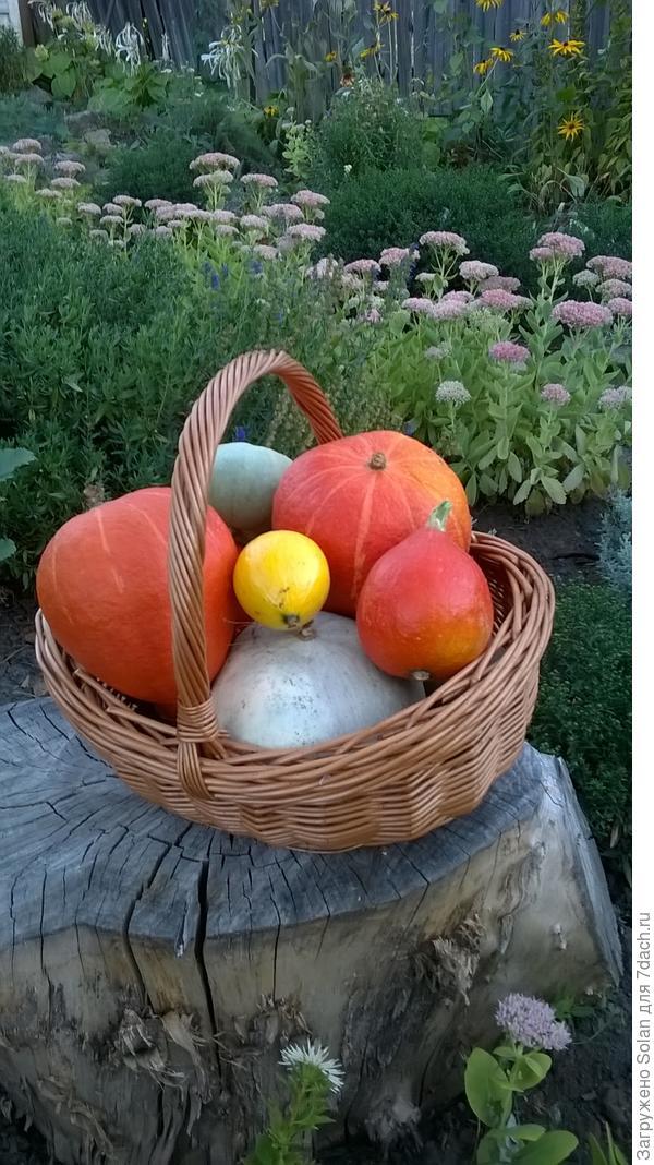 мини-урожай на мини-огороде)))
