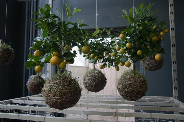 Подвесной сад Федора ван дер Фалька. Фото с сайта http://1.bp.blogspot.com/