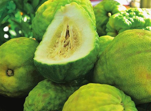 Плоды цитрона