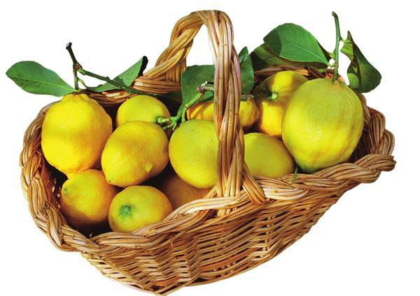 Лимоны зреют круглый год