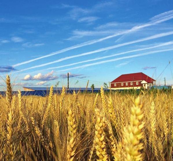 Фермерское хозяйство семьи Суровых