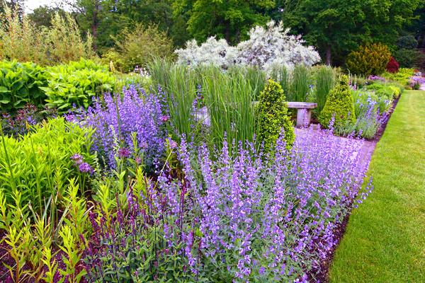 Знакомые растения могут не только услаждать взоры, но и лечить тело и душу, создавая правильное настроение