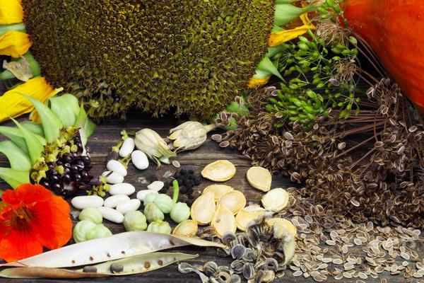 Эти несложные правила помогут собрать и сохранить семена до весны