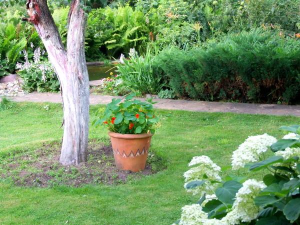 Проверьте, все ли проходы в саду свободны