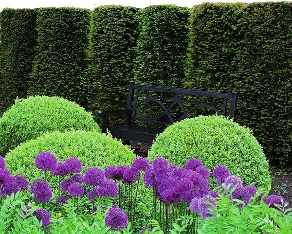 В дизайне сада хвойные вертикали используются в одиночных посадках, в группах, в изгородях, в кустарниковых миксбордерах и в составе композиций с травянистыми многолетниками.