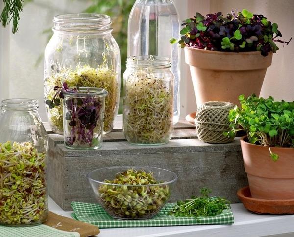 Из семян вдруг появляются белые стебельки, потом они становятся зелеными. и все это - у вас на подоконнике.