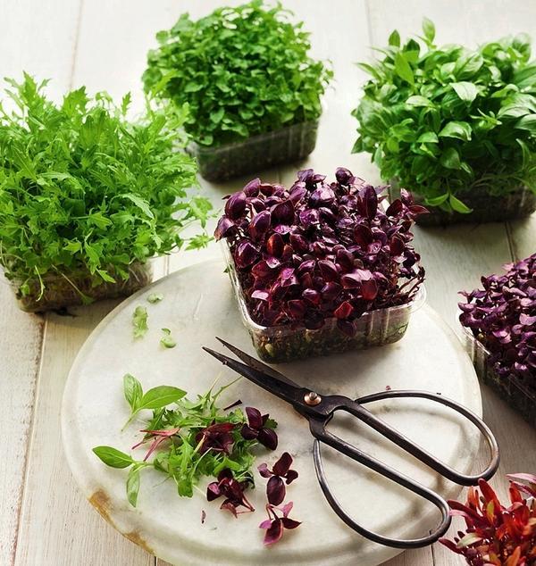 Слева направо: капуста китайская, мята, зеленый и красный базилик, кресс-салат, свекла и сельдерей.