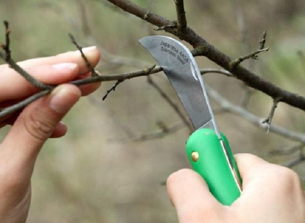 Обрезочный садовый нож. Фото с сайта eti-online.org