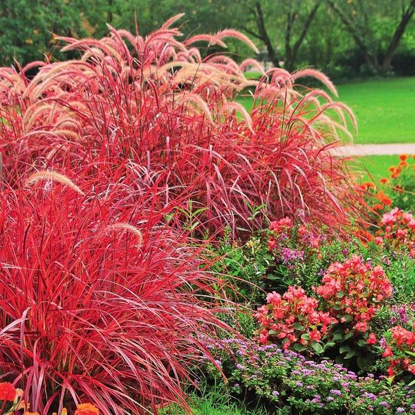 Красных растений в саду не должно быть слишком много.