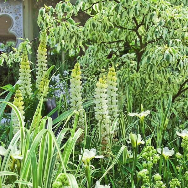 Сад в белых тонах подарит умиротворение и настроит на романтический лад.