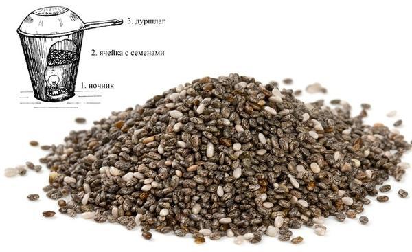 Сушилка для семян