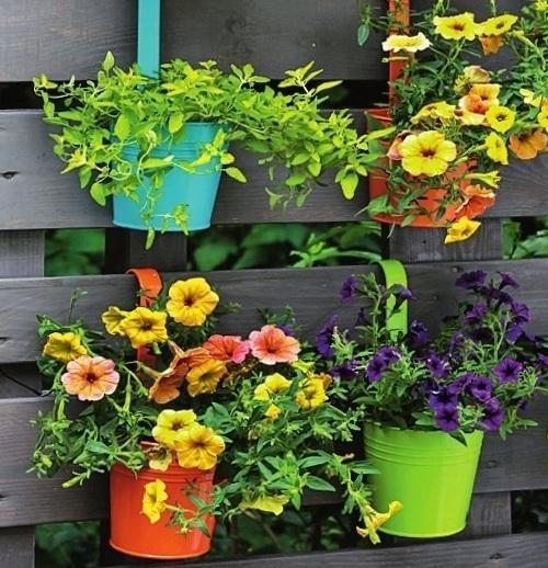 Ширму украшают горшечные растения с яркими цветками.