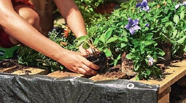 И посадите растения, например садовую землянику, мяту, полуденник, петунию и платикодон.