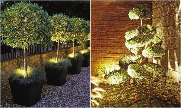 Слева: Акцентирующий свет используется для выделения отдельных деталей, например деревьев. Справа: Если на участке есть любимое дерево — направьте на него пересекающийся свет или подсветите снизу.