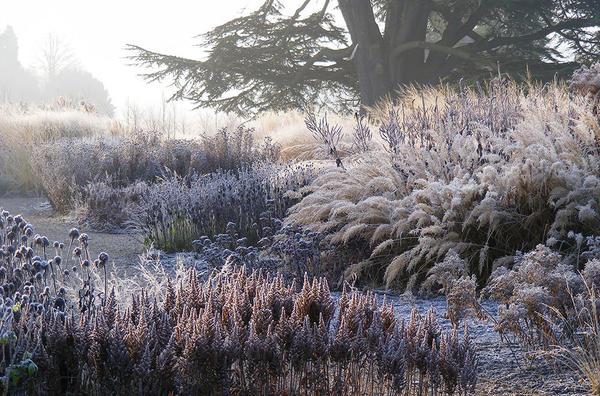 Сад Пита Удольфа в Трентэме зимой. Фото с сайта oudolf.com