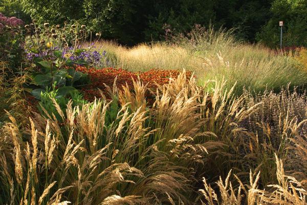 Метелки и перья. Фото с сайта oudolf.com.