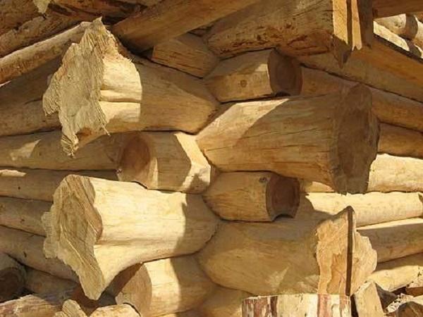 Для пущей экзотичности бревенчатой постройки использованы бревна с комлевыми юбками