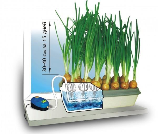 Гидропонная установка для выращивания лука. Фото с сайта landscape-project.com