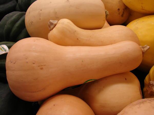 Сорт мускатной тыквы Вита. Фото с сайта americanfoodroots.com