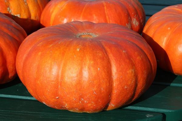 Многие сразу представляют себе немаленький плод ярко-желтого или оранжевого цвета.
