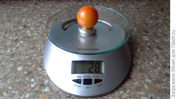 Помидор на весах