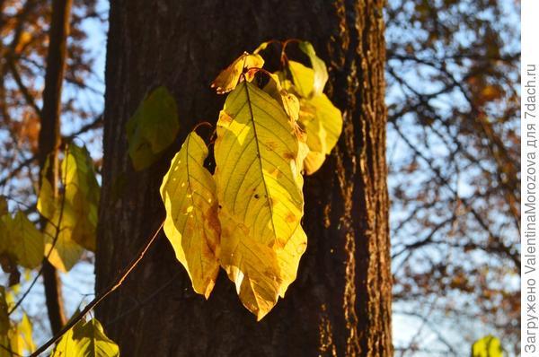 Последние листы роняет осень.