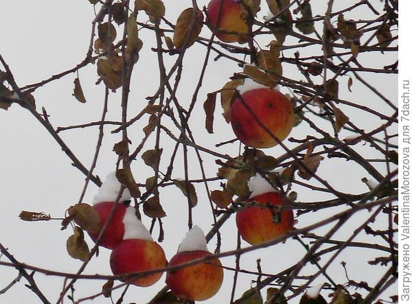 Осенние шары