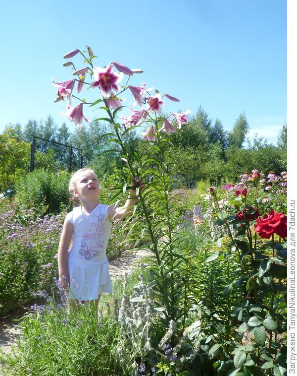 Фризо в нашем саду