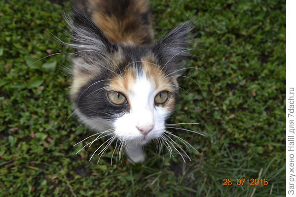 А эта кошечка наша Джесика,она мышеловка.В огороде ловить мышей.
