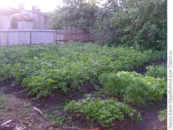 Огород июнь