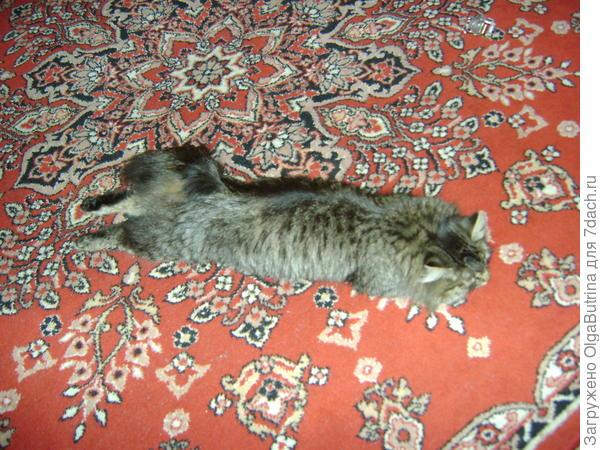 Вот так, протянув ножки, мы тоже иногда спим