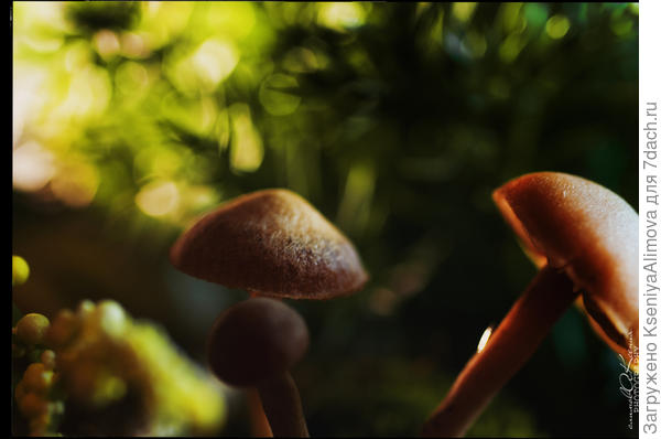грибочки