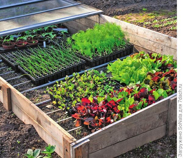 Огородники используют парники в основном ранней весной для посева на рассаду овощных растений