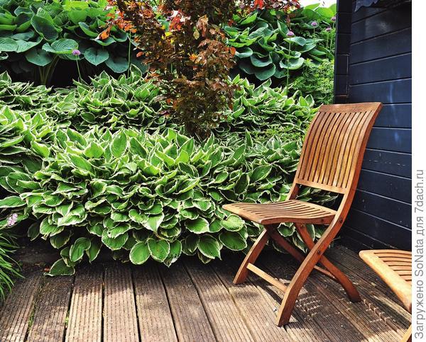 Пестролистные формы растения позволяют сделать объемными даже самые небольшие уголки сада.