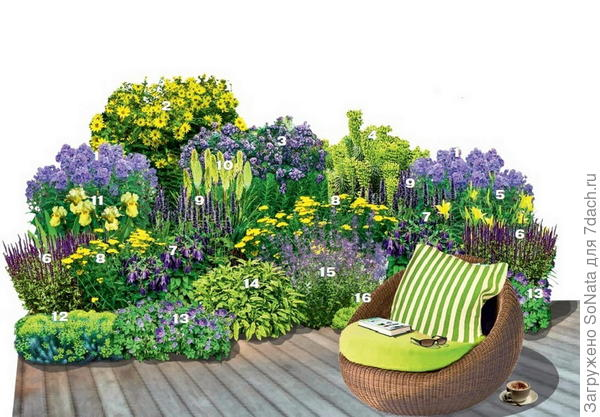 Хотите, чтобы цветник у террасы или местечка для отдыха был неотразим с середины лета и до первых заморозков? Тогда этот изысканный лилово-желтый «комплимент» для вас!